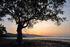 Silhouette Of Tree Sunset Royalty Free Stock Photo