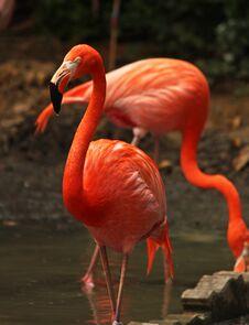 Free Flamingo In Bird Sanctuary Royalty Free Stock Image - 29978636