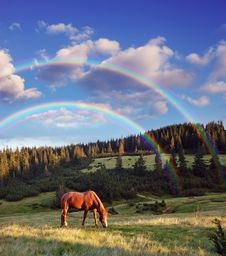 Free A Horse Grazing In The Mountains Royalty Free Stock Image - 29980536