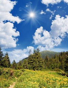 Free Forest With Yellow Flowers In The Mountains Stock Image - 29980541