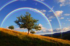Free Rainbow Over Tree Stock Photos - 29980573