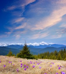 Beautiful Mountain Flowers Stock Images