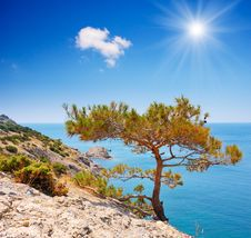 Free Mountain Pine On A Rock By The Sea Royalty Free Stock Photography - 29980617