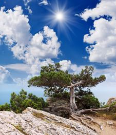 Free Sunny Landscape With Tree Stock Photography - 29980622