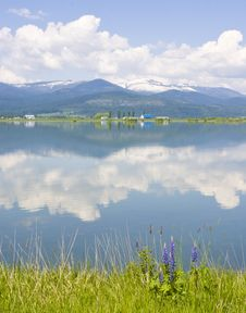 Pend Oreille River Reflection Of Clouds, Selkirk Mountains And Western Lupine Royalty Free Stock Photography