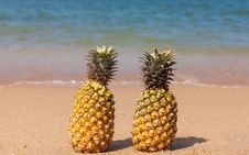 Two Pineapples On The Beach. Stock Images