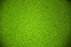 Free Duckweed Royalty Free Stock Photos - 29983578