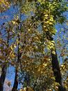 Free Autumn In Michigan Royalty Free Stock Photos - 30088