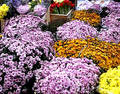 Free Bunches Of Flowers Stock Photos - 30743