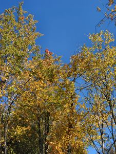 Free Autumn In Michigan – 04_10_2_001 Royalty Free Stock Image - 30086