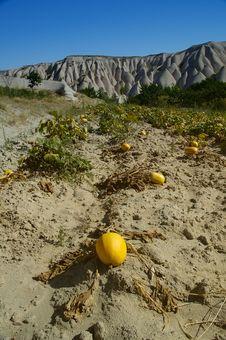 Free Melon / Pumpkin Garden In Cappadocia Royalty Free Stock Image - 32926