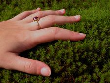 Free Woman Hand And Moss Royalty Free Stock Photography - 33067