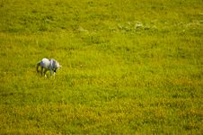 Free Horse In Meadow Stock Photography - 35042