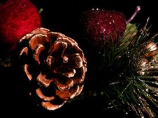 Free Painted Pinecone On Black Stock Images - 36264