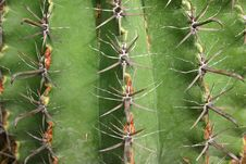 Free Cactus - Surface Royalty Free Stock Photo - 36335