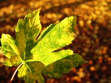 Free In The Autumn Forest Royalty Free Stock Photography - 38377