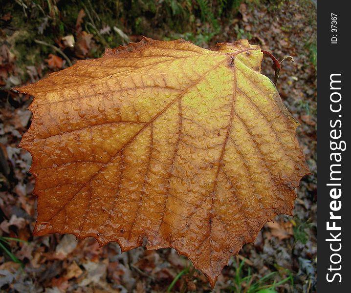 Autumn s Last Leaf