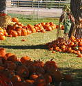 Free Pumpkin Path Royalty Free Stock Photos - 307378
