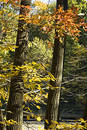 Free Colors Of Autumn Royalty Free Stock Images - 308169