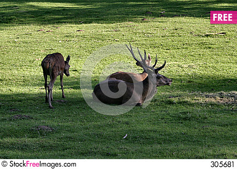 Free Deer Family Stock Image - 305681