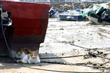 Free Cats Resting Under A Boat Stock Photo - 300380
