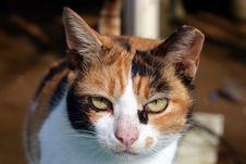 Free Cat Close Up Stock Photography - 300402