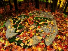 Free Autumn Leaves On Rock Stock Photo - 301160