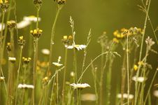 Free Delicate Wildflowers Royalty Free Stock Images - 301929