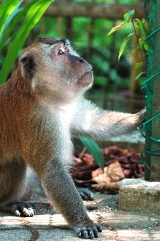 Free Monkey Stock Photos - 302013