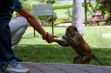 Free Feeding Monkey Stock Images - 302134