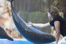 Free Delfines Stock Image - 302681