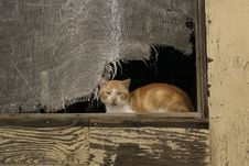 Free Cat In Window Stock Photography - 302822