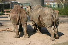 Free Two Rhinos Stock Photos - 303533