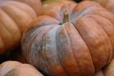 Free Cinderella Pumpkin Patch Royalty Free Stock Photography - 304337