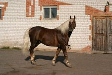 Free An Orlov Trotter During An Exhibition Stock Images - 305204