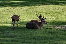Free Deer Family Stock Image - 305681