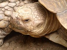 Free Tortoise Royalty Free Stock Photo - 306445