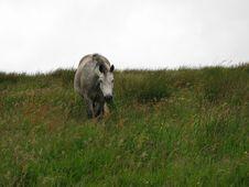 Free Irish Horse Royalty Free Stock Image - 306546