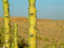 Free Cactus In Desert Stock Photos - 307033