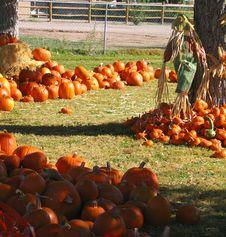 Free Pumpkin Path Royalty Free Stock Photos - 307378