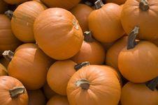 Free Small Pumpkins Stock Photos - 308383
