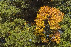 Free Green And Yellow Leaves Stock Image - 308681