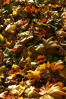 Free Fallen Leaves Stock Photography - 308912