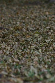 Free Fallen Leaves Royalty Free Stock Photography - 309357