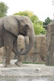 Free Elephant Walking Stock Image - 309401