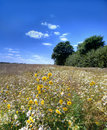 Free The Countryside - Summer Royalty Free Stock Images - 3001719