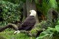 Free Majestic Eagle Stock Image - 3003881