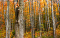 Free Autumn Trees Stock Images - 3005294