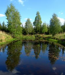 Free Reflections In The Pond Stock Images - 3000174