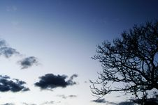 Free Tree And Clouds Stock Photo - 3000530